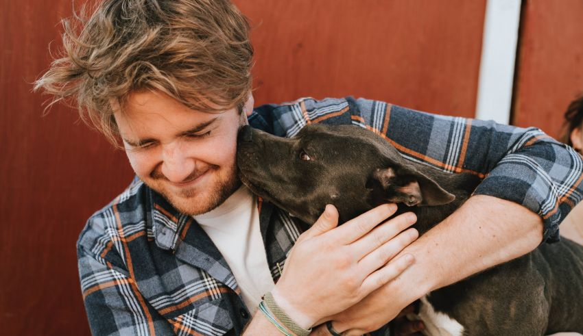 Worried about the safety of your pets? Here are ways to feel more secure