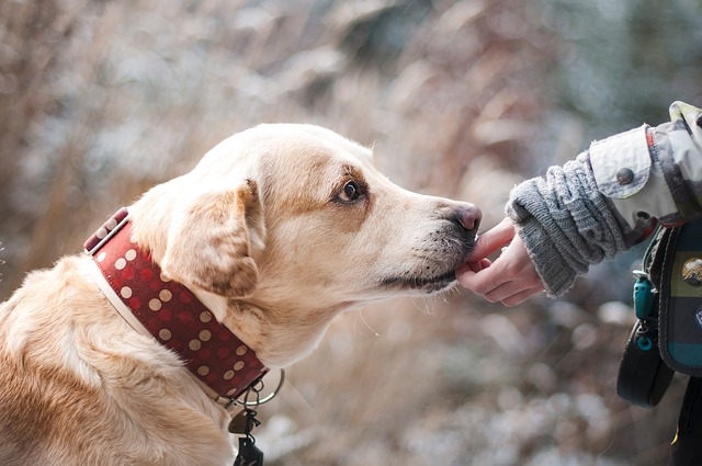 Easy Ways to Keep your Dog Healthy