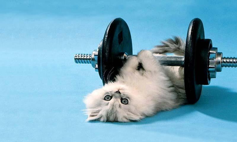 cat exercise