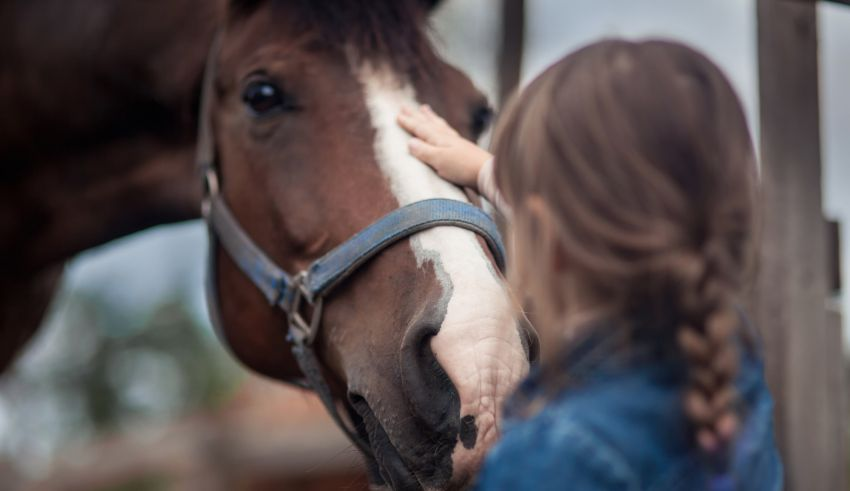 5 Tips For Keeping Flies Out of Your Stable and Away From Your Horses