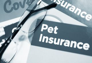 Is Pet Insurance Worth It? 6 Moments It Absolutely Is