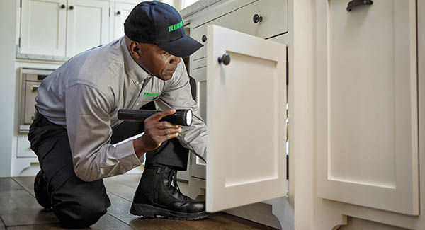 Contact Local Pest Services