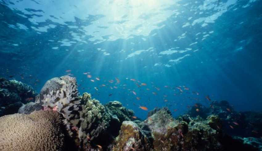How Much Of The Ocean Has Been Explored